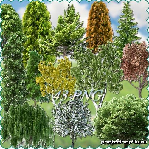 Клипарт - деревья на прозрачном фоне