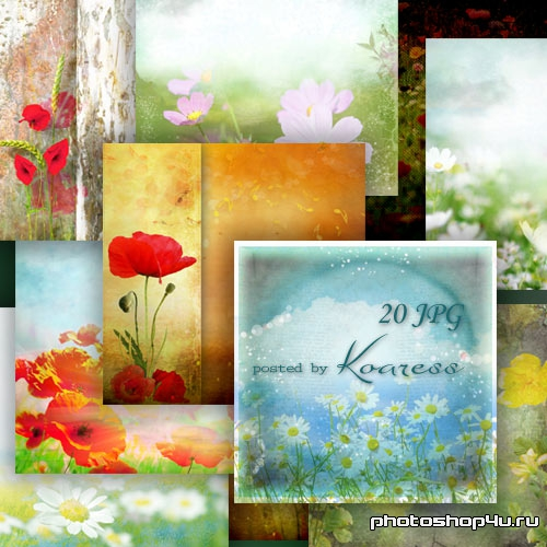 Цветочные фоны для дизайна полевые