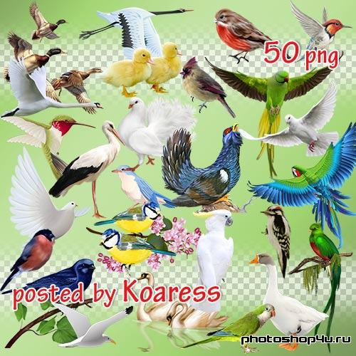 Png клипарт для дизайна - Разнообразные птицы на прозрачном фоне
